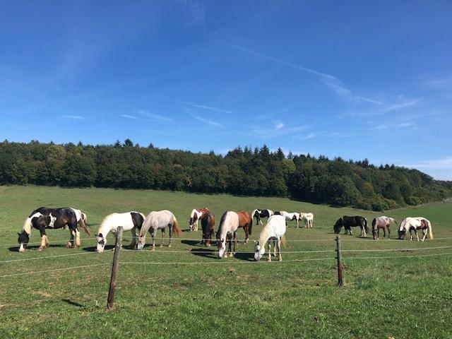 Verkaufspferde - Ponys - Reitanlage Heidwaldhof - Merzig-Silwingen - Saarland - Pferd kaufen